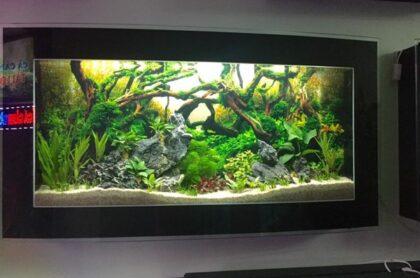 Bể Cá TReo Tường Kính Cong
