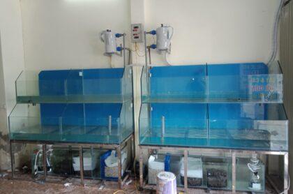 Mẫu Bể Hải Sản Thi Công Tại Bắc Giang