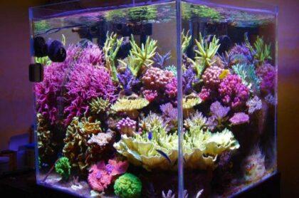 Mẫu Bể Cá Biển 01