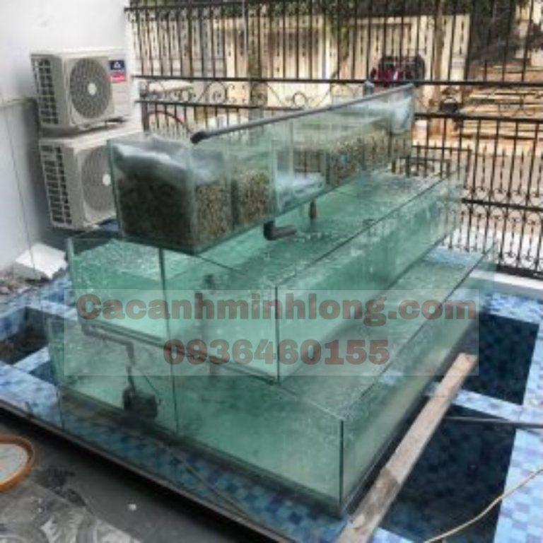 Mẫu Bể Hải Sản Thi Công Tại Long Biên