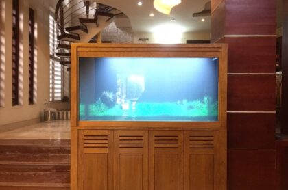 Bể cá Rồng Thi Công Tại Sóc Sơn – Hà Nội