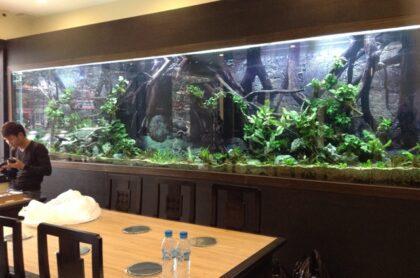 Bể thủy sinh 5,2m tại nhà hàng Sĩ PHú 121 – Nguyễn Phong Sắc