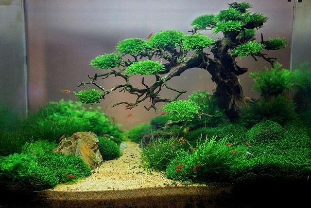 Mẫu Bể Thủy Sinh Rêu Đẹp