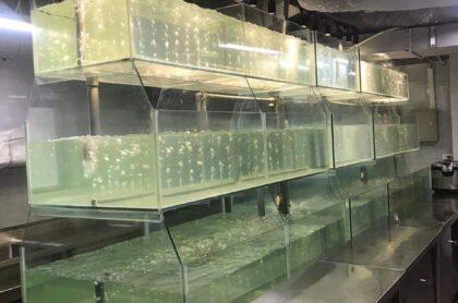 Bể Hỉa Sản Thi Công Tại Hào Nam – Hà Nội