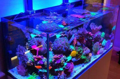 Mẫu Bể Cá Biển 04