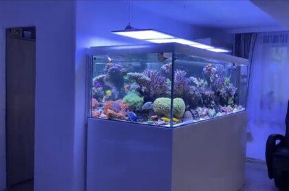 Mẫu Bể Cá Biển 02
