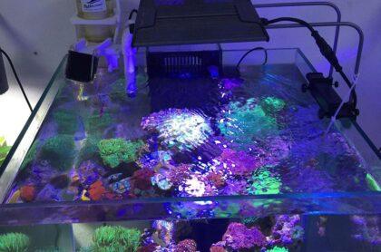 Mẫu Bể Cá Biển 03